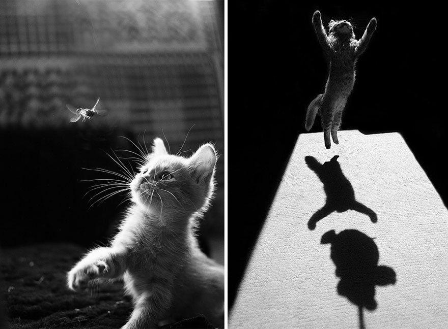 Belles images de chats en noir et blanc.
