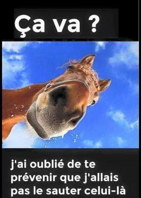 Gags animaux