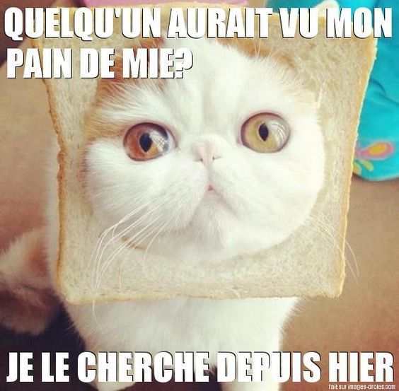 Blagues de chats en images