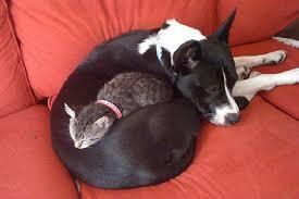 Belles images d'amitié entre chiens et chats