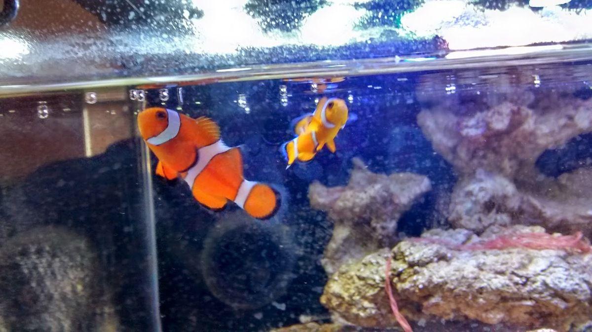 2 petits poissons clown