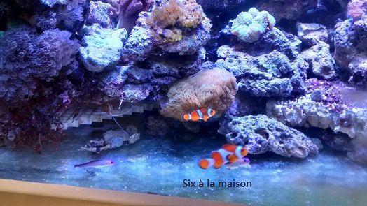aquarium récifal