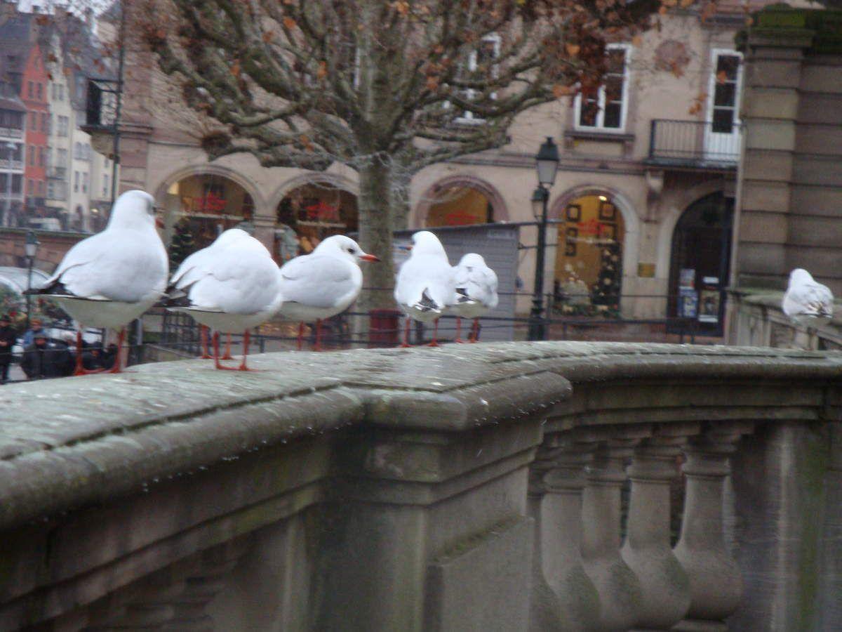Marché de noël à Strasbourg 16 et 17 décembre 2014