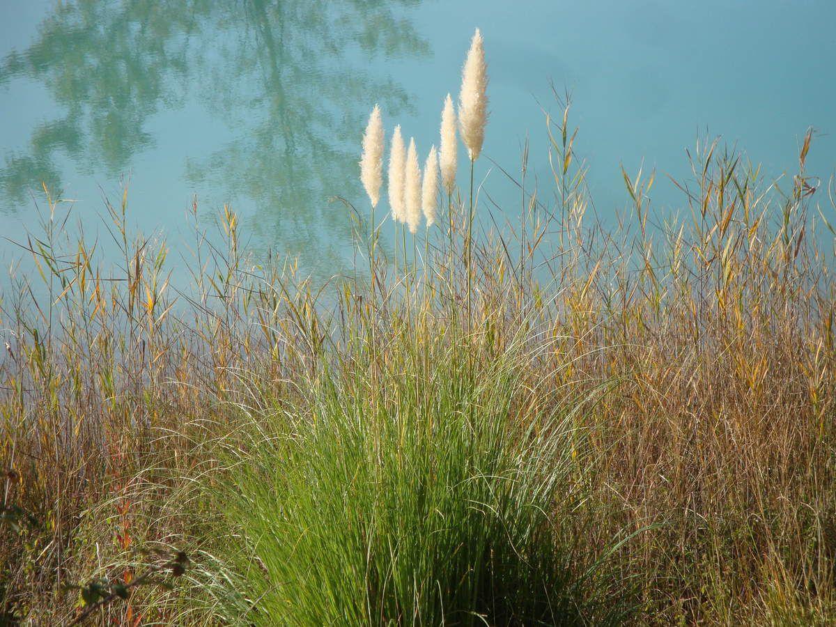 Lac des Buissonnades à Oraison