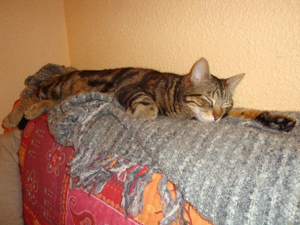 Les aventures de Manouche et Métis, mes chats : 2014.
