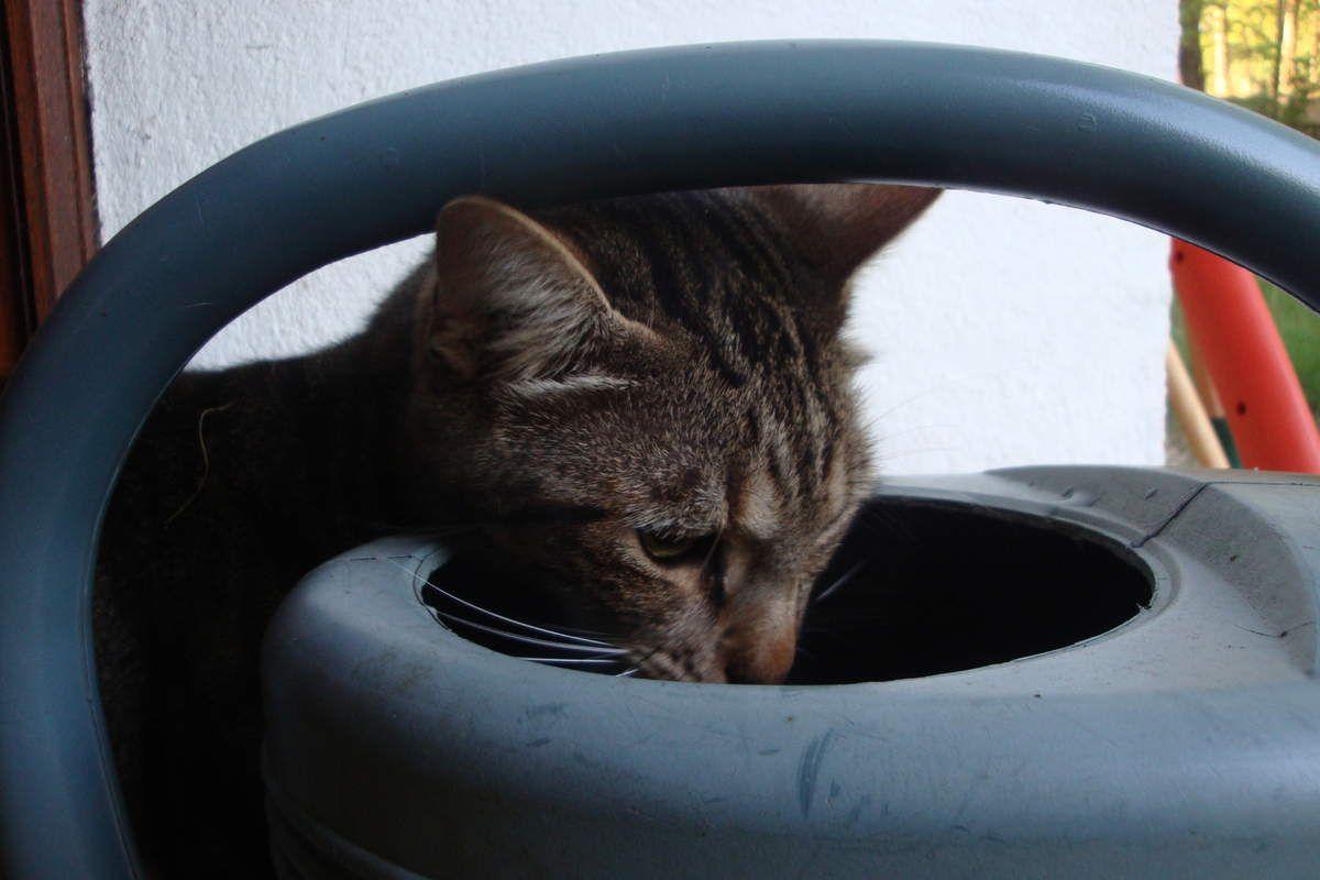 Les aventures de Manouche et Métis, mes chats : 2013