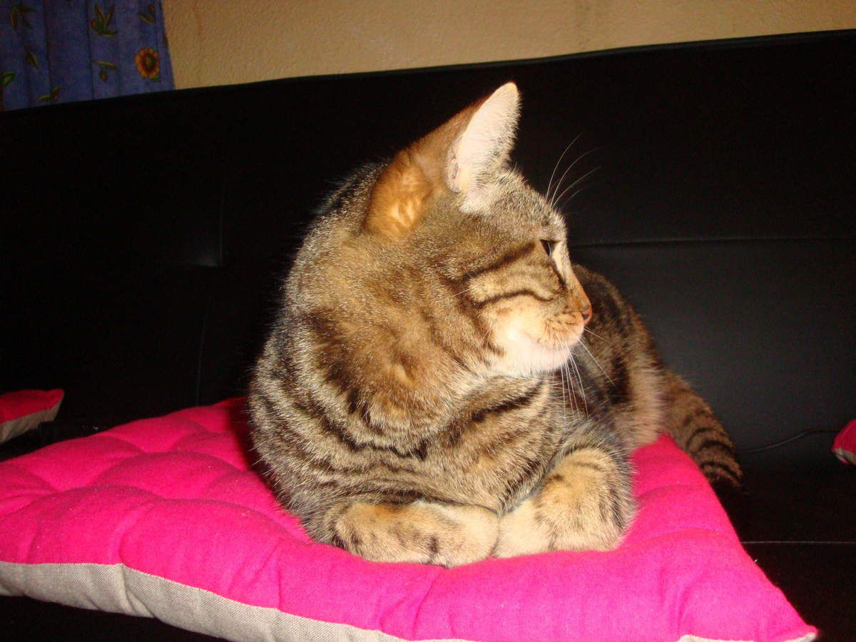 Manouche et Métis, mes chats : 2016