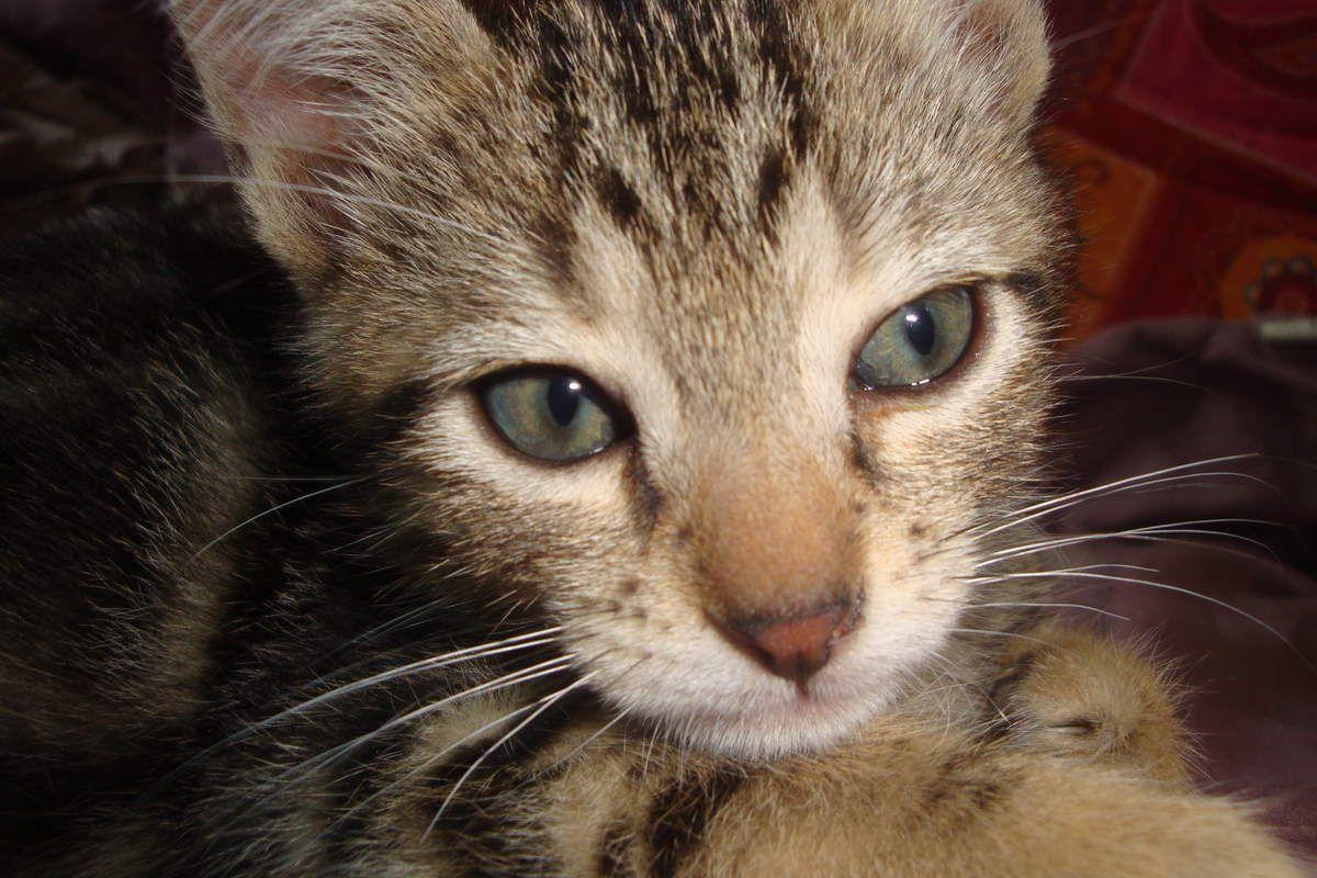 Les aventures de Manouche et Métis, mes chats : 2011
