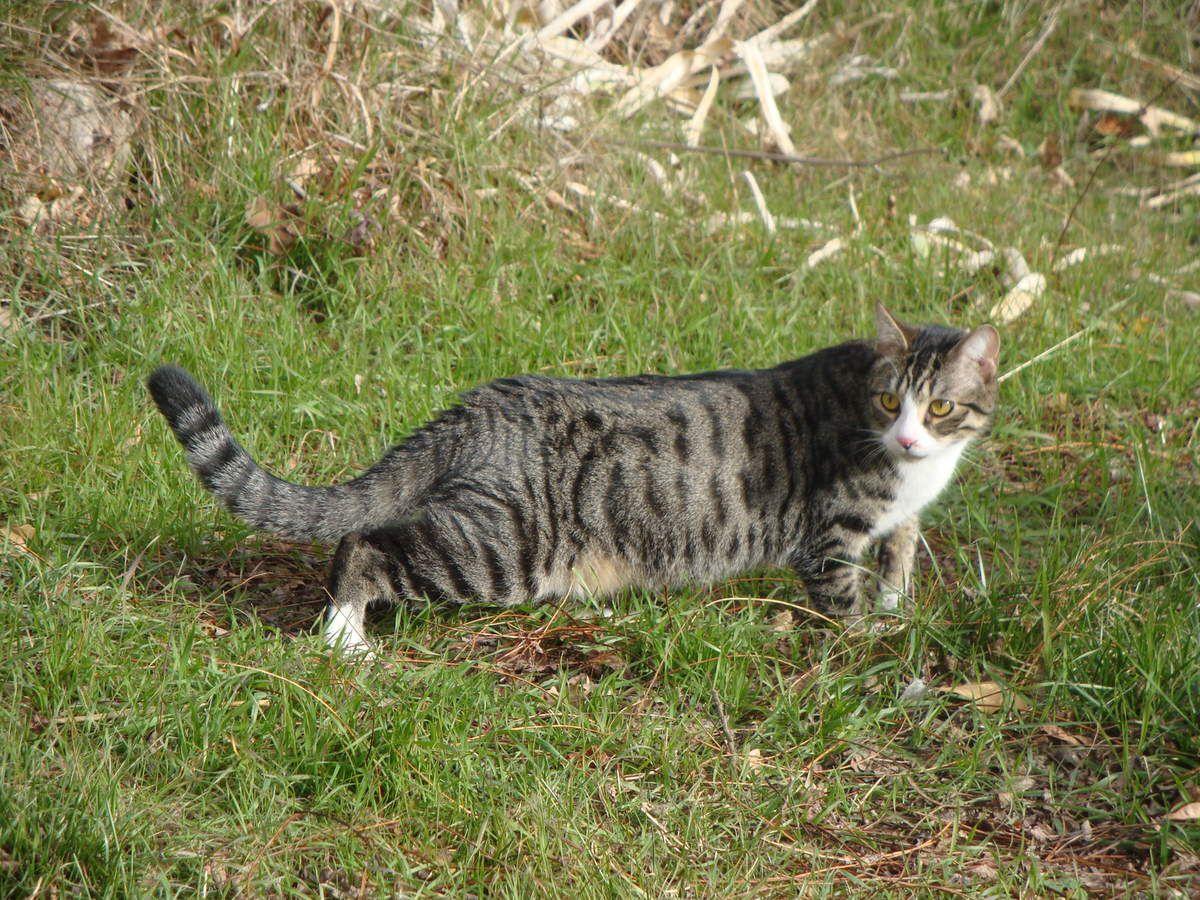 Les aventures de Manouche et Métis, mes chats : 2012