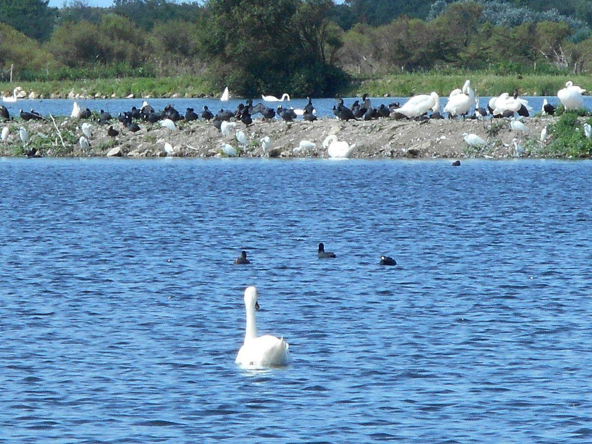 Les oiseaux de l'île d'Oléron