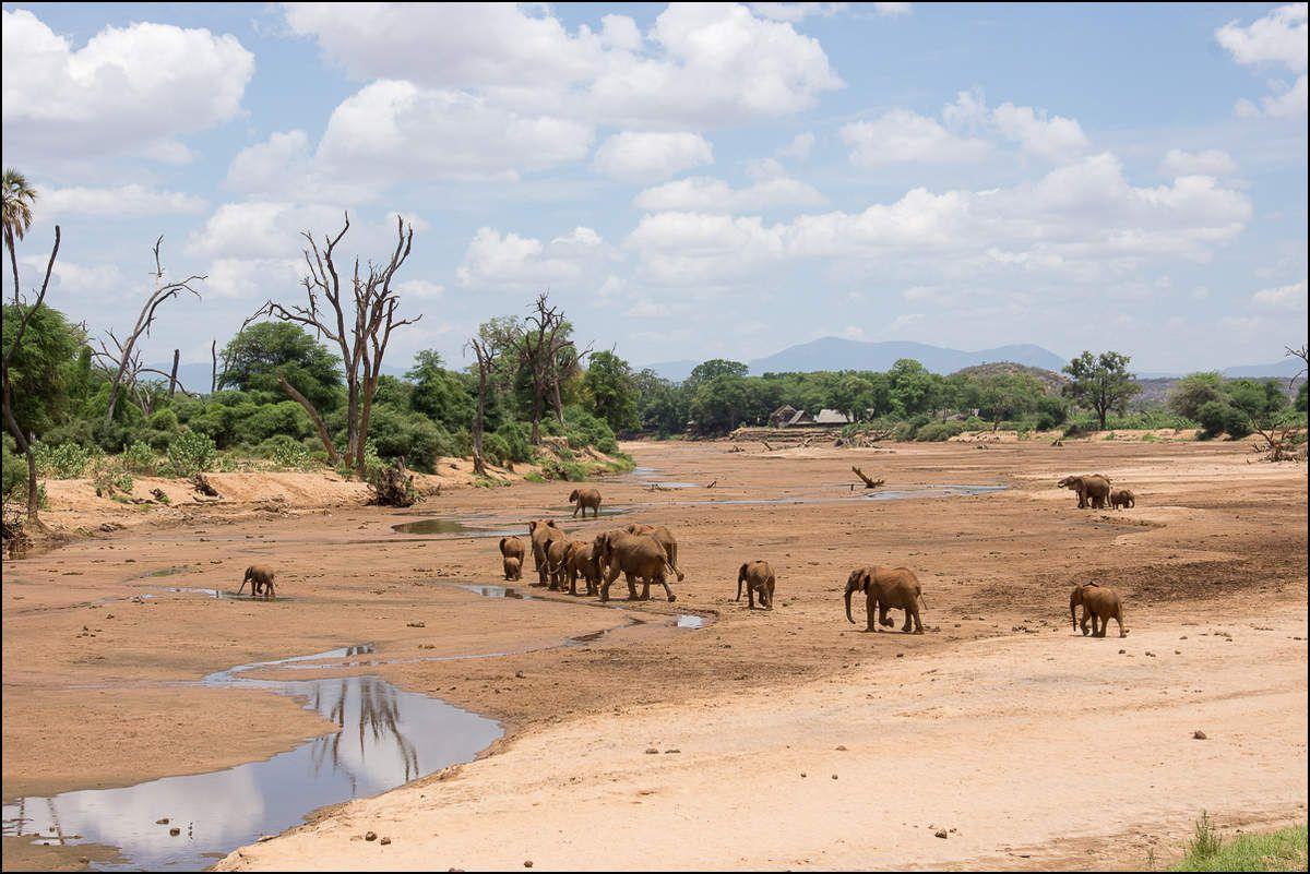 Paysage éléphantesque