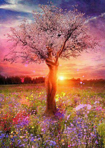 L'arbre de l'amour ♥