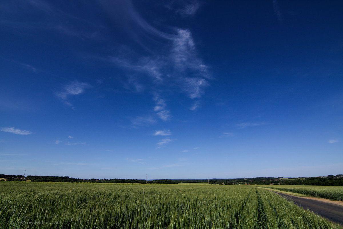 Verte Campagne sous le Ciel Bleu