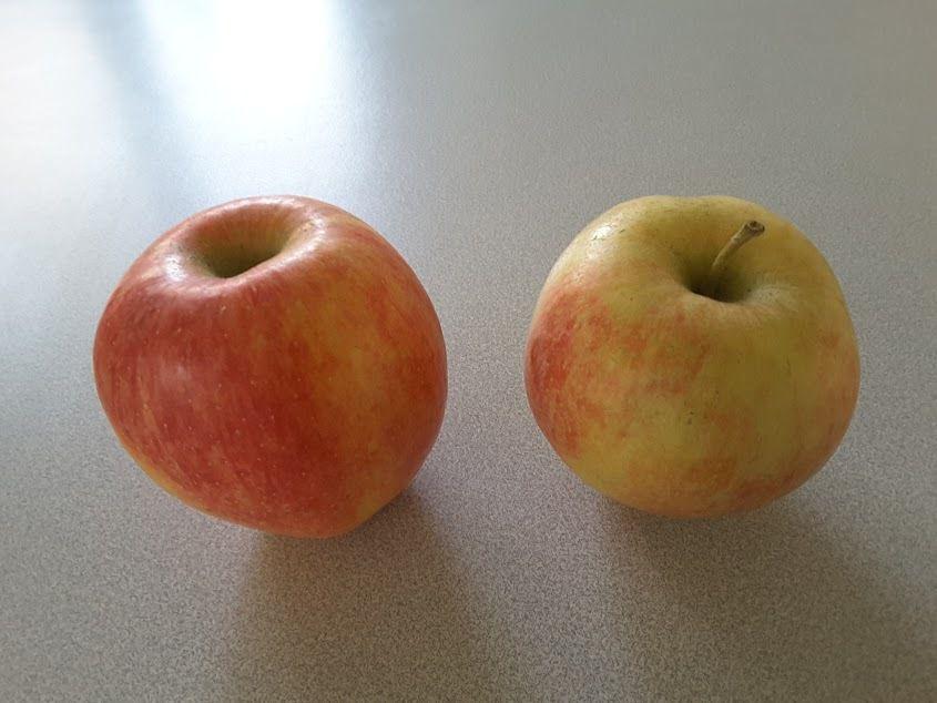 Humour coquin: La pomme, un fruit hermaphrodite?