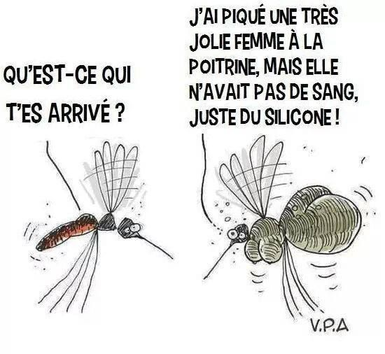 photo drole moustique
