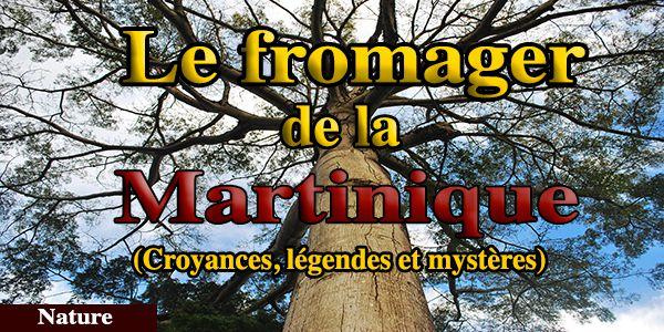 Biographie du fromager de la Martinique, croyances, légende et mystères autour du fromager
