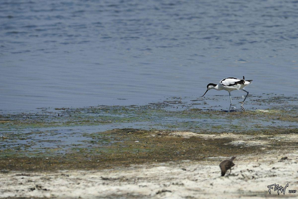 A voir dans les environs : Lac de Pomorié