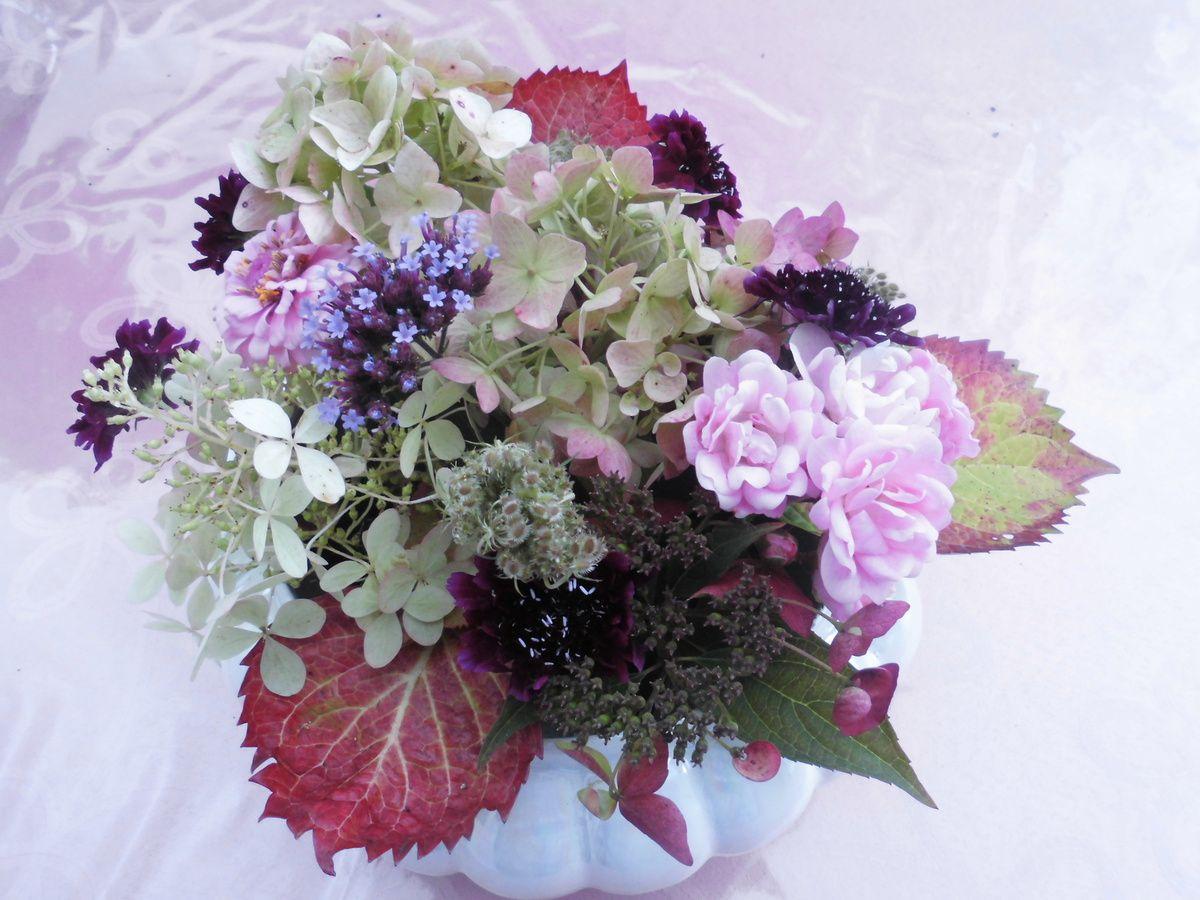 Hydrangeas, rosier Fairy, verbena, knautia macedonia