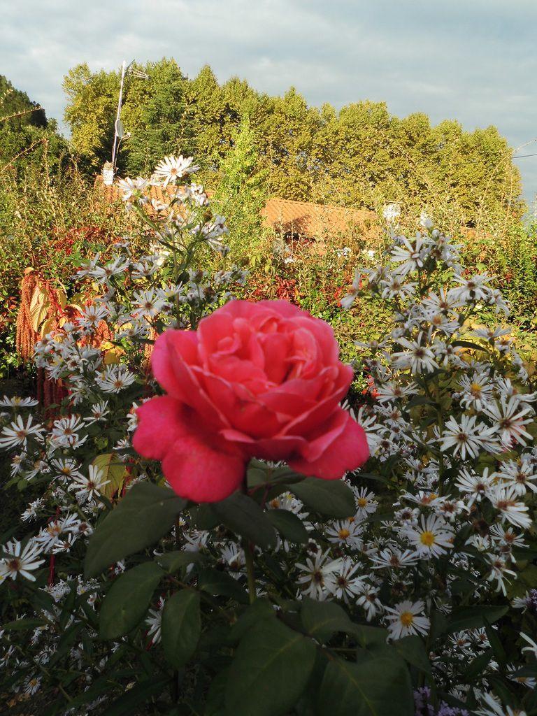 Dernière fleur de Line Renaud. Va t il enfin pleuvoir?