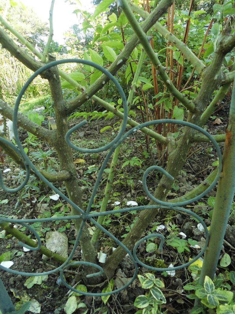 Je ne veux qu'il reste arbuste voir petit grimpant, recouvrant partiellement l'arche, de l'autre côté il y a ballerina