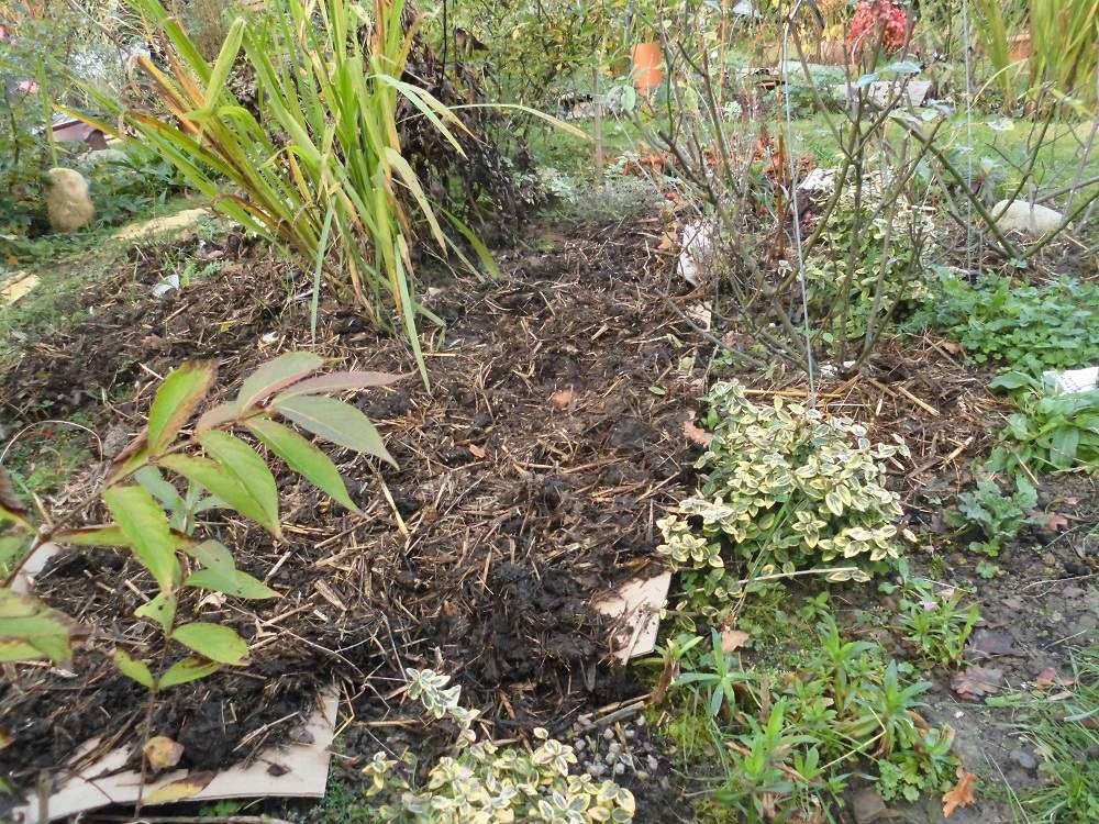 Jardin fin novembre.