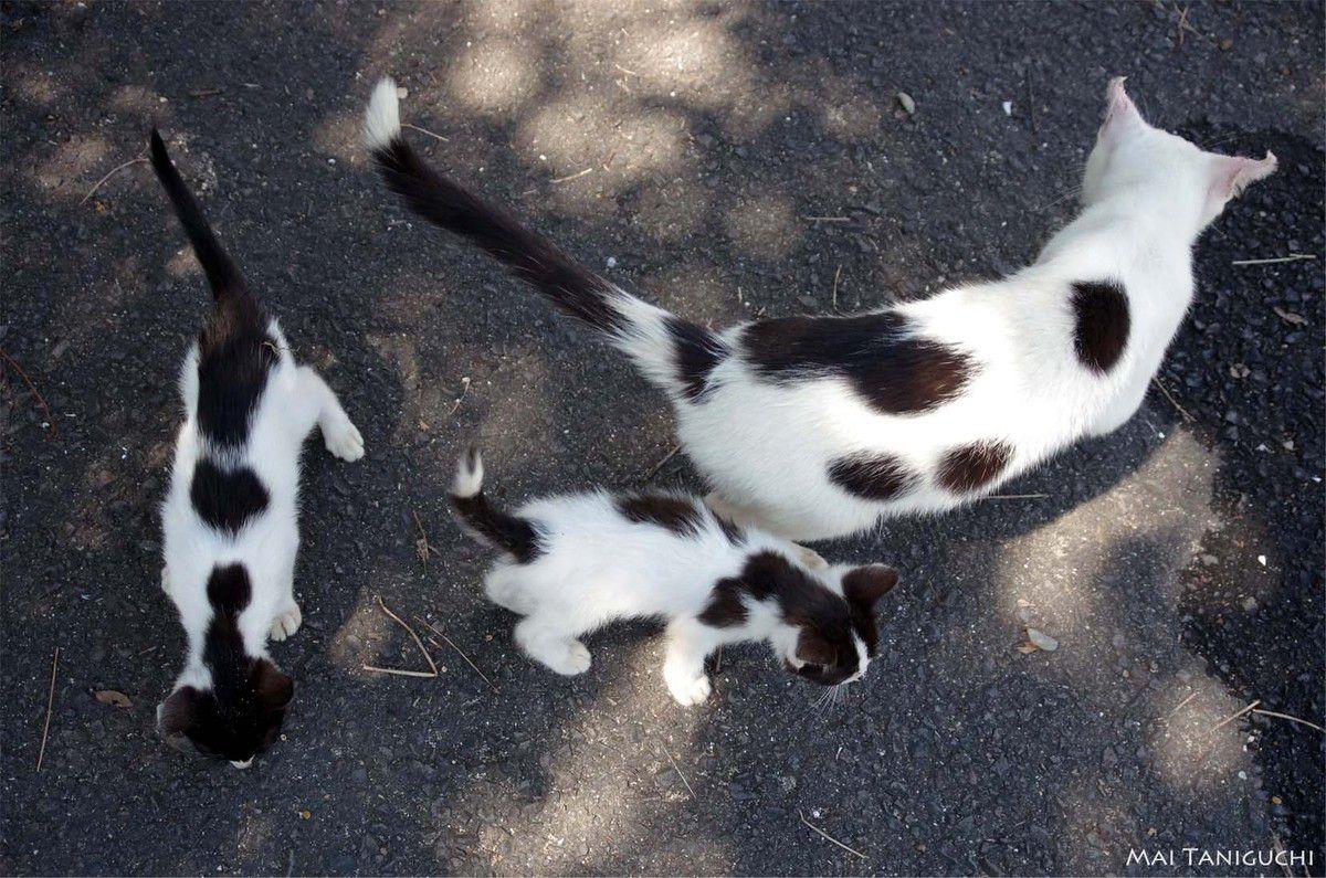 Que de chats