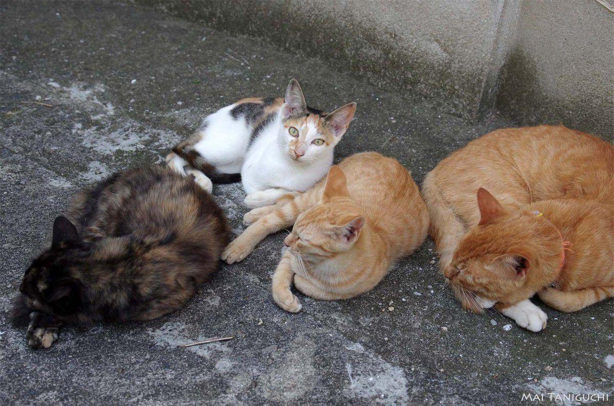 Quelle belle vie de chat !