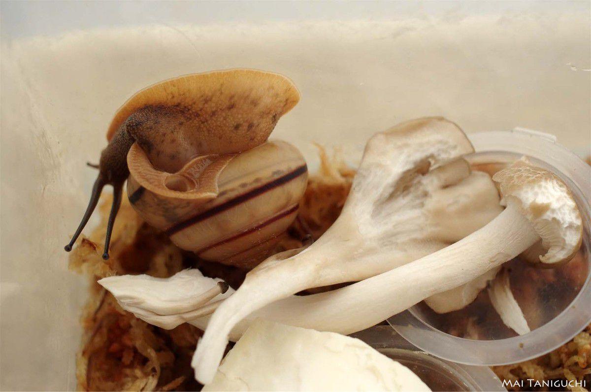 Ensuite les escargots