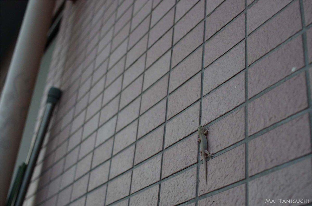 Au revoir le petit gecko !