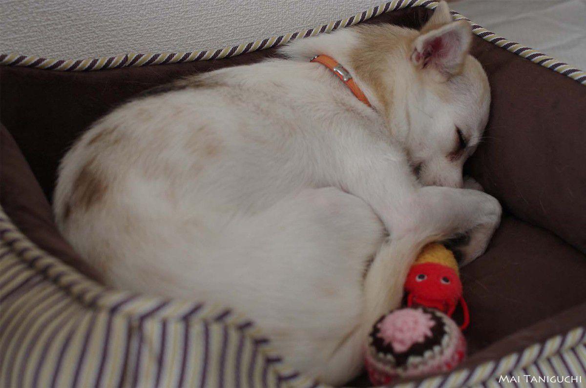 Ma petite chienne Melmo