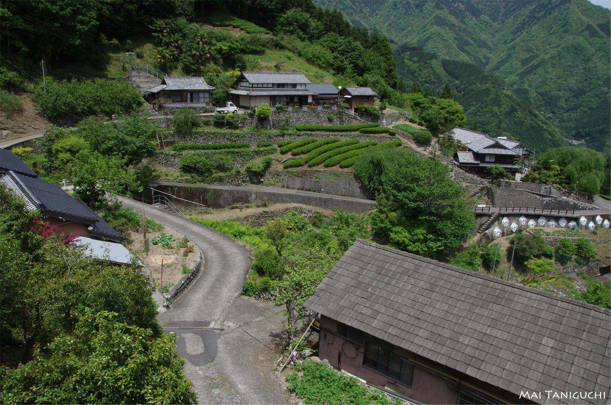 Les champs de Mizugaura
