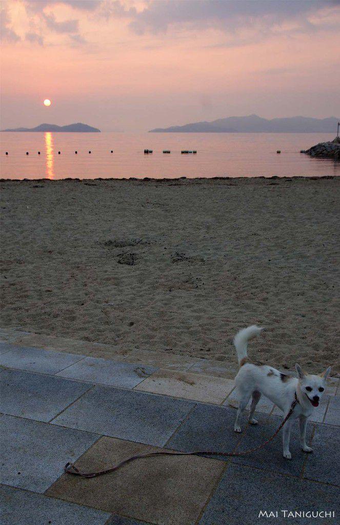 Un petit matin à l'île Megi