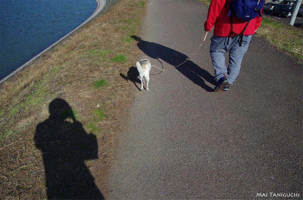 Promenade quotidienne