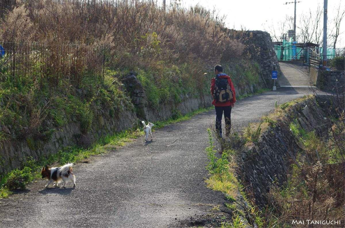 Une balade de narcisses avec deux chiens
