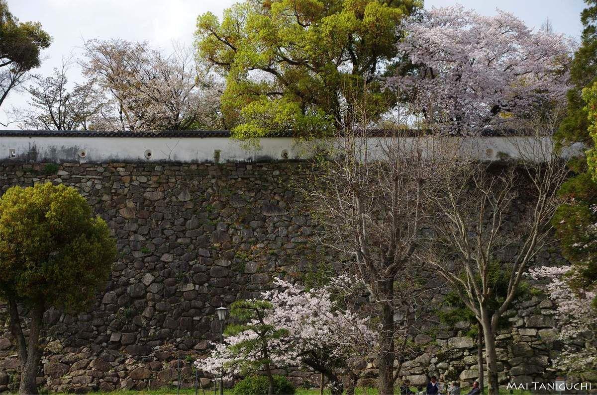 Le hanami à Okayama