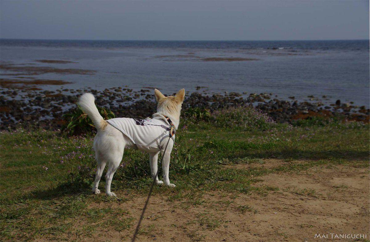 L'île Tsuno - les vacances en mai