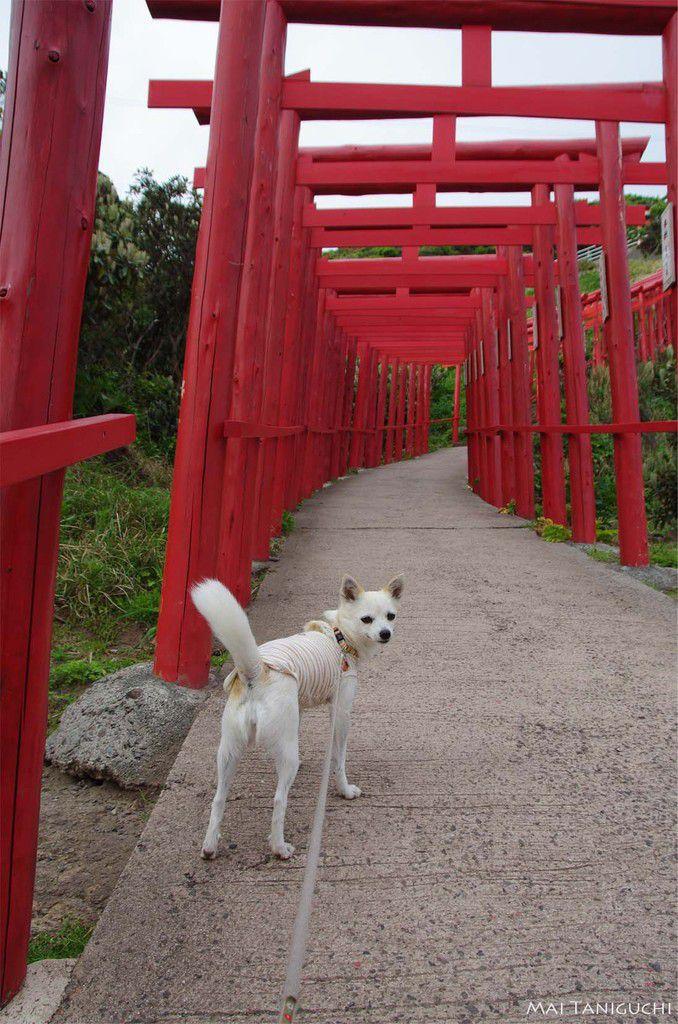 La côte de la mer du Japon -les vacances en mai