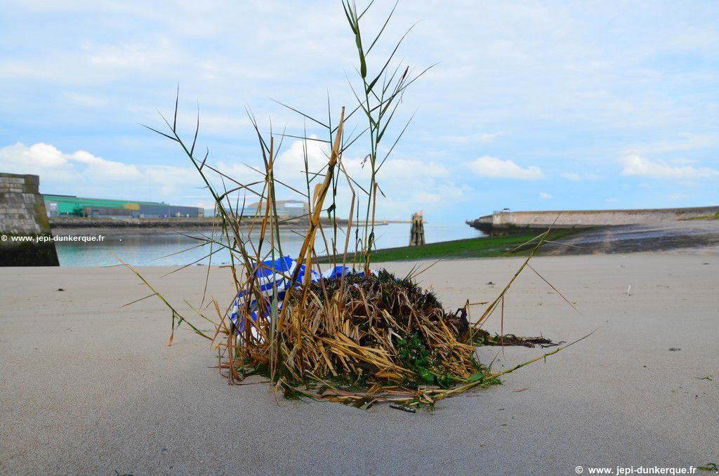 Balade automnale sur la jetée de Malo les Bains-Dunkerque 2016