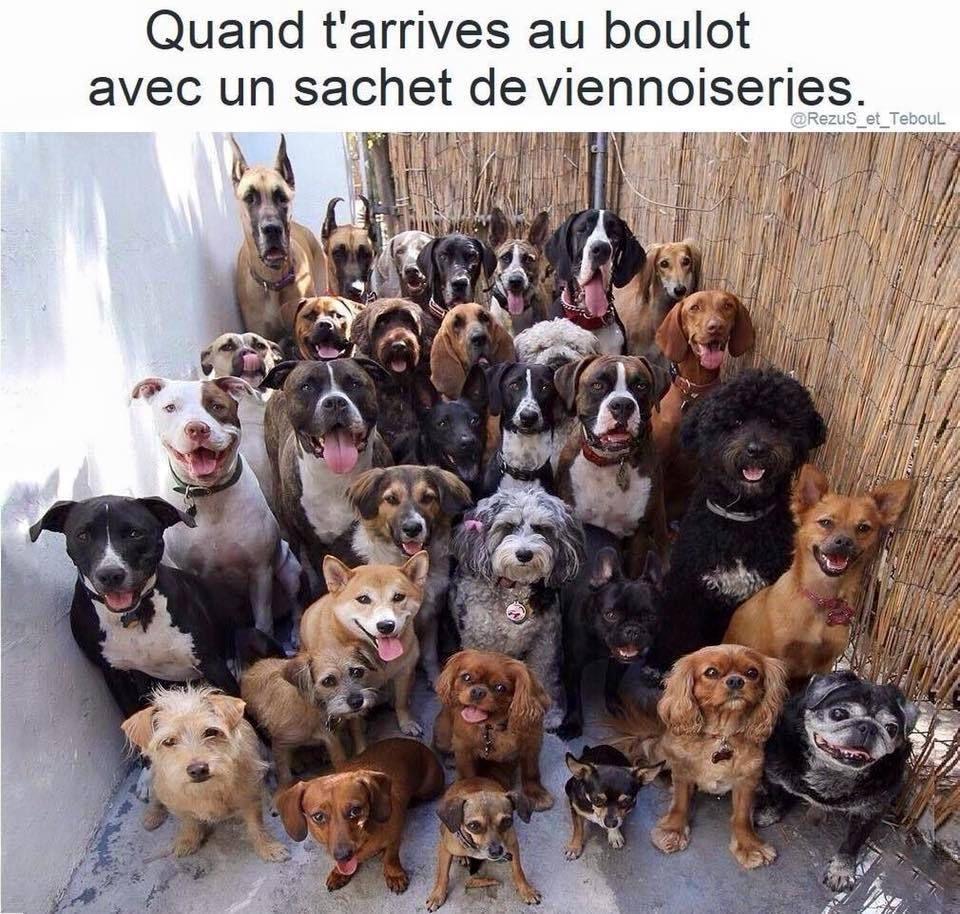 Humour du NET