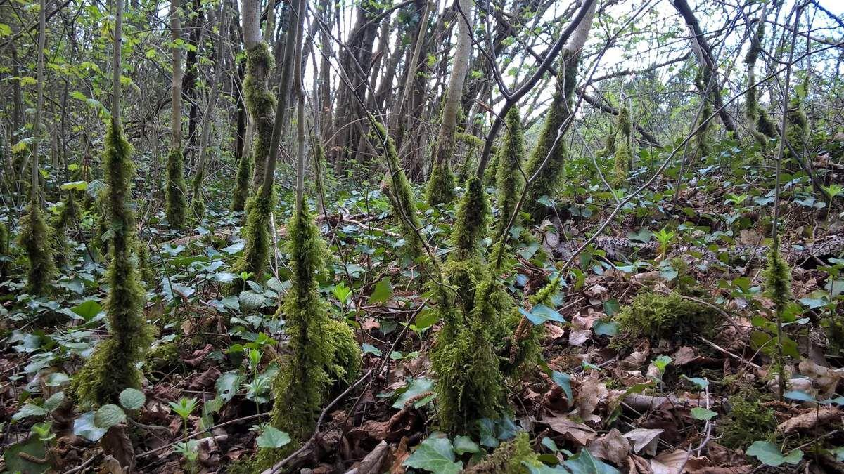 Balade en forêt Algrange