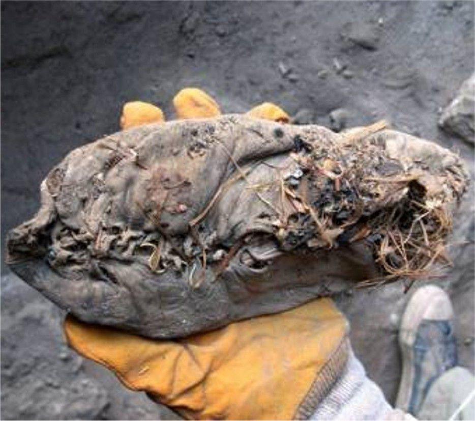 Une des plus vieilles chaussures du monde a 5500 ans