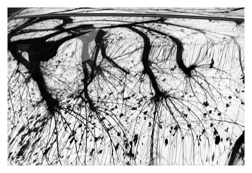 La mécanique des arbres (13)