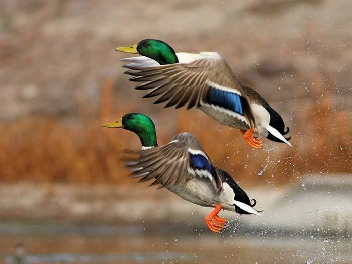 Divers - les oiseaux - 3