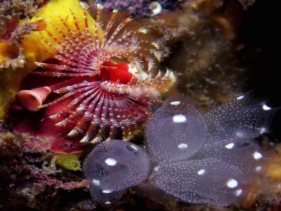 L'Australie - la barrière de corail - 1