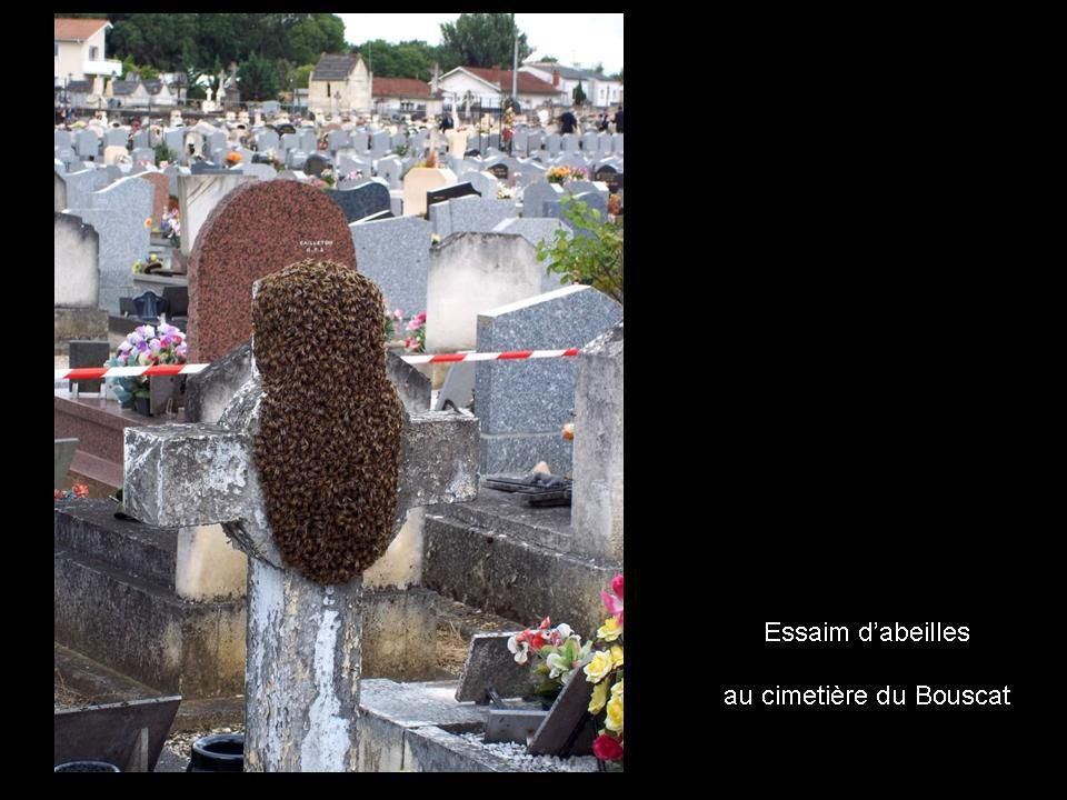 Divers - Les abeilles - 1