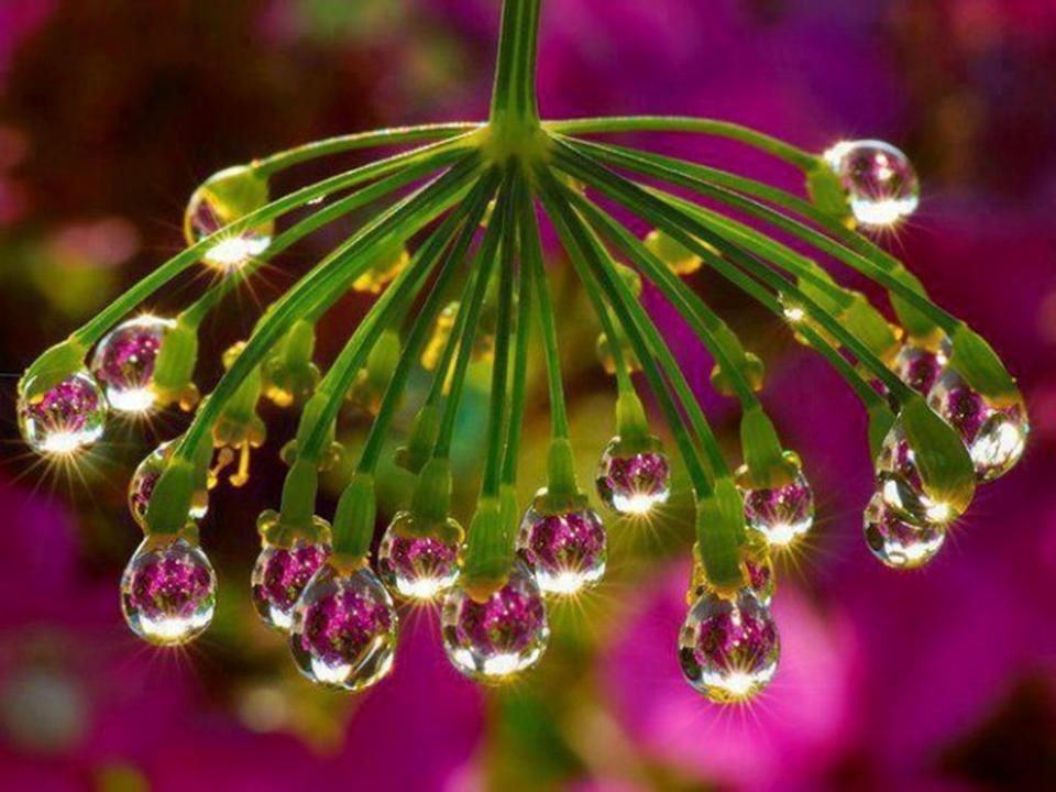 Divers -  les plus belles fleurs - 2