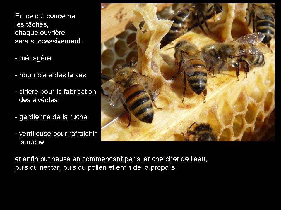 Divers - Les abeilles - 2