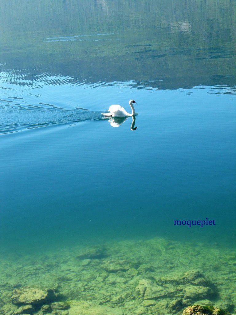 La France - Le lac du Bourget