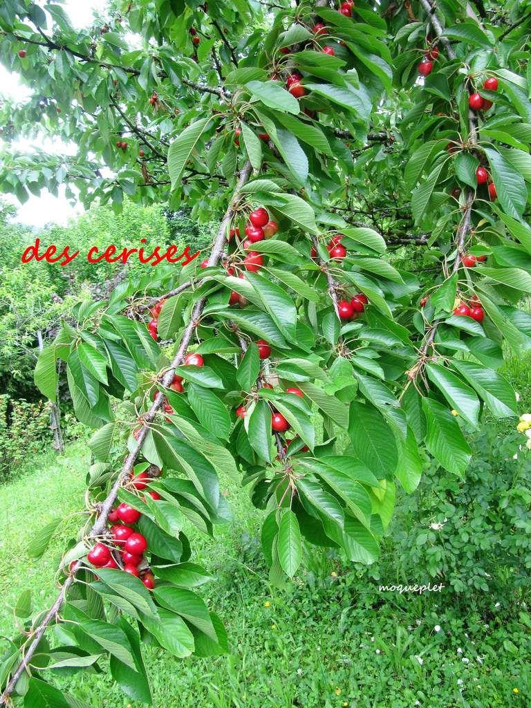 Divers - Dans le Jardin - les arbres fruitiers