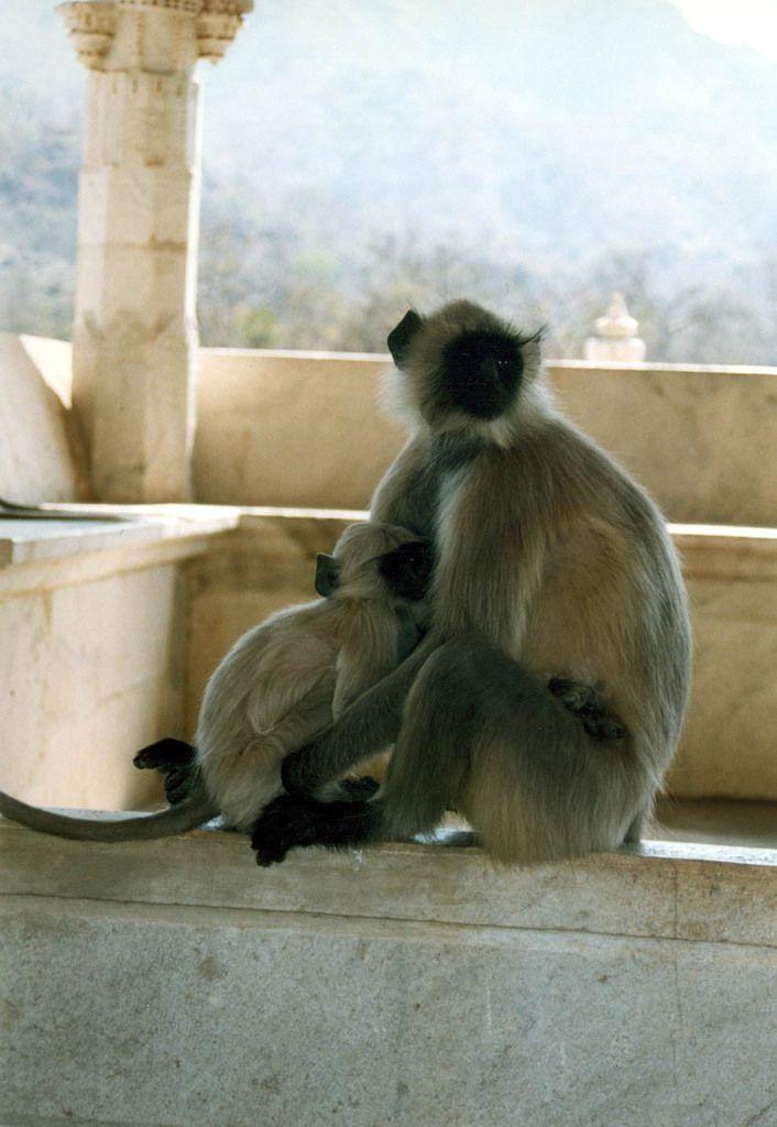 Wenigstens die Affen wollten für Fotos keine Bonbons, Kugelschreiber oder Geld.